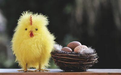 Кое е първо – кокошката или яйцето?